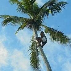 Cestománie: Cookovy ostrovy - Květy Pacifiku