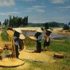 Cestománie: Vietnam – Barvy tropů