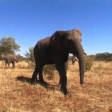 Cestománie: Zambie – U krále králů