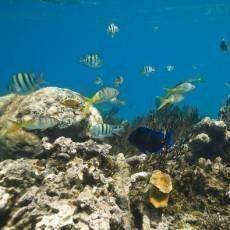 dominikanska-republika-vodni-fauna