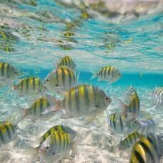 dominikanska-republika-vodni-fauna-ryby