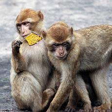 Zoo Lešná - výlet plný zvířátek - Chytrá žena b9ff58f5a3