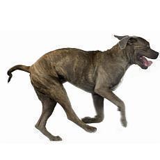 Tipy na převýchovu psa