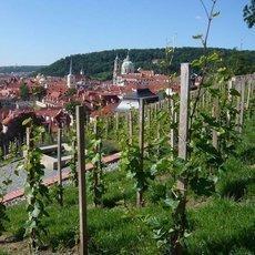 ve víně je ... Praha