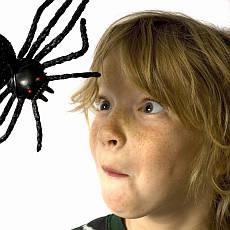 hon na pavouka