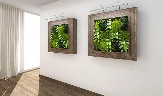 Obrazy z rostlin
