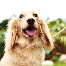 Veterináři varují: Lidské jídlo psům škodí