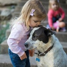 Jaké plemeno psa vybírat, máme-li doma malé dítě?