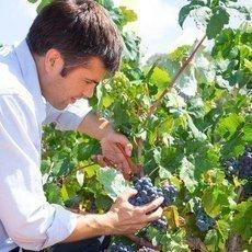 Zajímavosti z vinic. Víte, co rozhoduje o úspěchu vína?