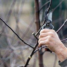 Jak si poradit s prořezáním stromů a keřů na podzim?