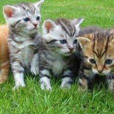 5 tipů, jak se dobře postarat o kotě