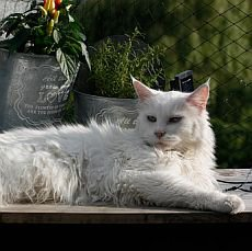 krmení starší kočky