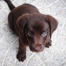 Praktické tipy, jak odnaučit psy žebrat o jídlo