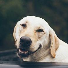 péče o chrup psa