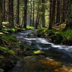 10 tipů na výlety po Šumavě: pro rodiny, romantiky i gurmány