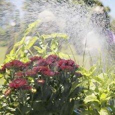 Jak na správné a účinné zavlažování zahrady