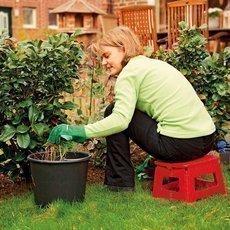 Výsadba zeleniny na podzim