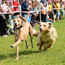 Moravský psí den