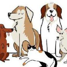 10 nejběžnějších onemocnění u psů