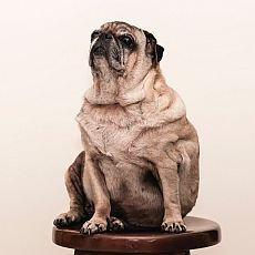 Má pes kila navíc? Obezita může mít i vážné zdravotní následky.