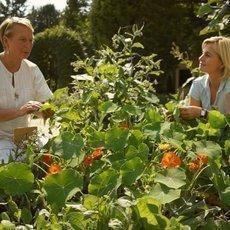 Kouzelné bylinky - Kouzelně léčivé bylinky