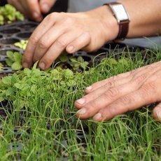 Kouzelné bylinky - První jarní bylinky