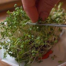 Kouzelné bylinky - Jarní únava není nemoc