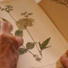 Kouzelné bylinky - Síla z přírody