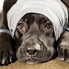 lezici-nemocny-pes-obklad