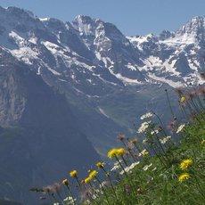 Na cestě po Bernských Alpách