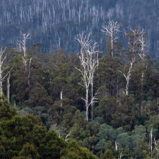 Na cestě po Tasmánii