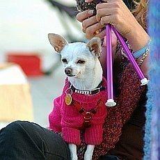 hypotéka a pes z množírny