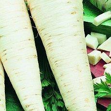 zelenina-jako-lek-petrzel