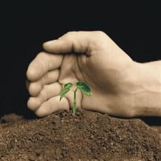 Plevel může být pro přírodu blahodárný!