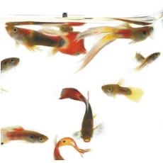 krmení rybiček