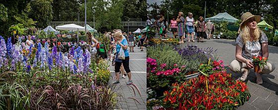 Letní Flora Olomouc 2020