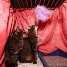umistovaci-vystava-kocek