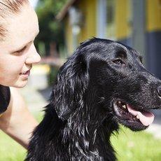 Život je pes - Nový domov