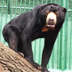 zoo-decin-medved-malajsky