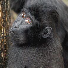 zoo-decin-opicak-satu