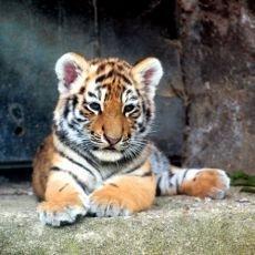 Přivítejte prázdniny s tygřími mláďaty a kmotrem Janem Rosákem