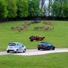 Na safari vlastním vozem poprvé v Česku!