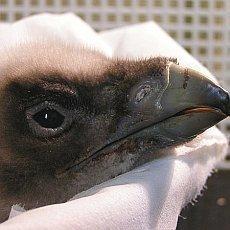 zoo-liberec-mlade-orlosupa