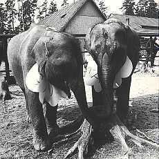 Křtiny slonic Gaurí a Rání