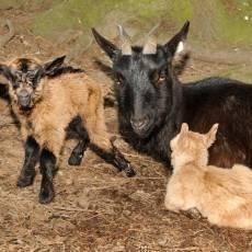zoo-olomouc-mlade-kuzle