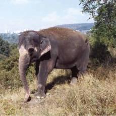 zoo-usti-slonice-delhi
