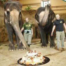 zoo-usti-slonice-kala-25-let