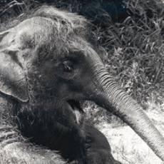 zoo-usti-slonice-kala