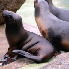zoo-zlin-lachtan-hugo